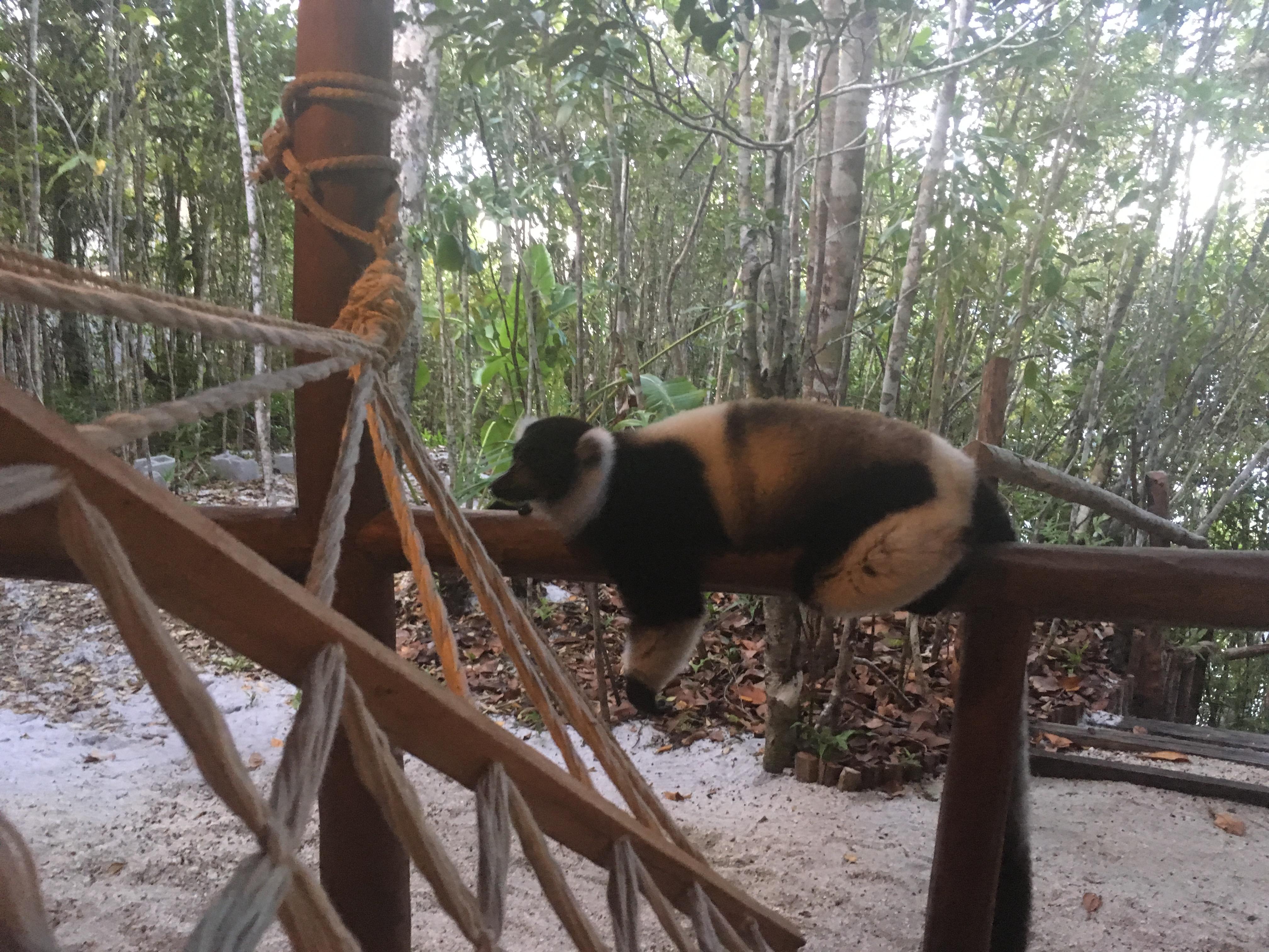 Odkryj Madagaskar Geotechnology